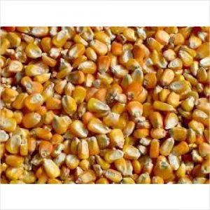 Pro-vit-min Whole Maize 20kg