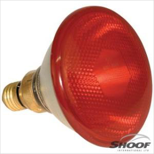 Shoof Lamp Infrared Kerbi Red 100w